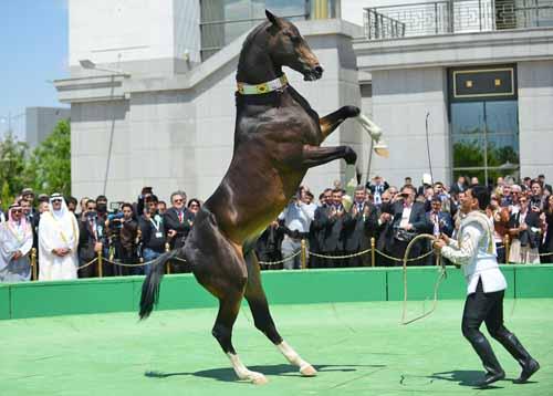 Türkmenistan at bayramı ve atçılık fuarı